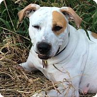 Adopt A Pet :: Ginny - Owatonna, MN