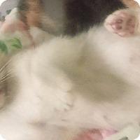 Adopt A Pet :: Clarabelly - Glen cove, NY