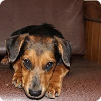 Adopt A Pet :: kai - Philadelphia, PA