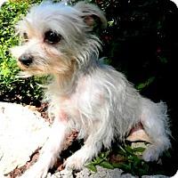 Adopt A Pet :: Stella - Tyler, TX