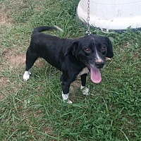 Adopt A Pet :: Bubba - Columbia, KY