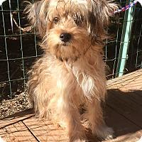 Adopt A Pet :: Skye - Santa Ana, CA