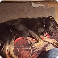 Adopt A Pet :: Marshmellow - Rexford, NY