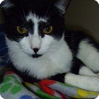 Adopt A Pet :: Frost - Hamburg, NY