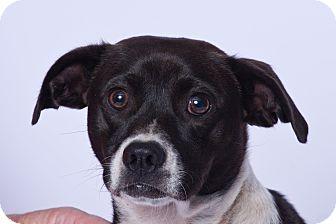 Basset Hound Mix Dog for adoption in Vidor, Texas - Lt. Dann