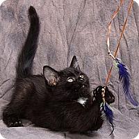 Adopt A Pet :: CHITA - Anna, IL