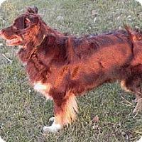 Adopt A Pet :: Katie - Blooming Prairie, MN