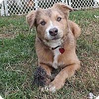 Adopt A Pet :: RUDY TUDY - Torrance, CA