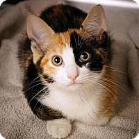 Adopt A Pet :: Fern - Brea, CA