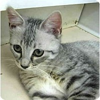 Adopt A Pet :: Summer Kittens - Deerfield Beach, FL