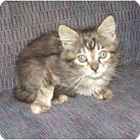 Adopt A Pet :: Cubby - Kirkwood, DE