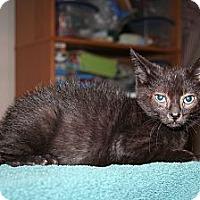 Adopt A Pet :: 3-legged - Santa Rosa, CA