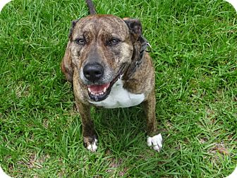 Hound (Unknown Type) Mix Dog for adoption in Jupiter, Florida - Serenity