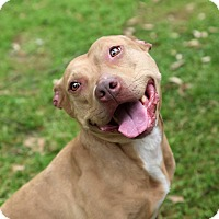 Adopt A Pet :: Ginger - New Orleans, LA