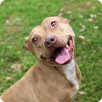 Adopt A Pet :: Ginger - Metairie, LA