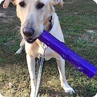 Adopt A Pet :: Judah - Richmond, VA