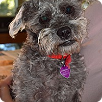 Adopt A Pet :: ELLIE - Mission Viejo, CA