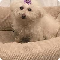 Adopt A Pet :: Maddy - Los Angeles, CA