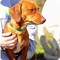 Adopt A Pet :: ROSIE - Lubbock, TX