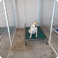 Adopt A Pet :: Ms Pacman - Lewisburg, TN