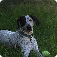 Adopt A Pet :: Josie - Portland, OR