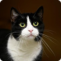 Adopt A Pet :: Earth Angel - Kettering, OH