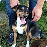 Adopt A Pet :: Pixie - Memphis, TN