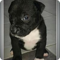 Adopt A Pet :: Female4 - Staunton, VA