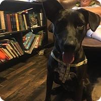 Adopt A Pet :: Casey - Hillsboro, MO