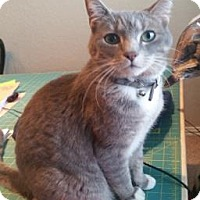 Adopt A Pet :: Pia - Bulverde, TX