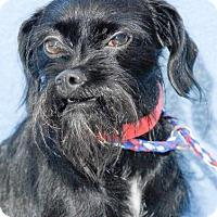 Adopt A Pet :: honey - Johnson City, TN