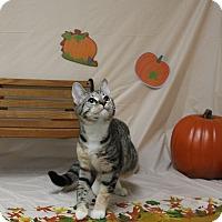 Adopt A Pet :: Ciinderella - Stockton, CA
