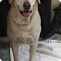 Adopt A Pet :: Lexi - Orlando, FL