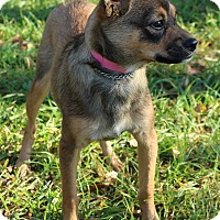 Adopt A Pet :: Zackie - Waldorf, MD