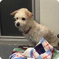 Adopt A Pet :: Bouncer *FOSTER NEEDED 12/3* - New York, NY
