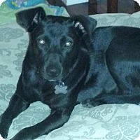 Adopt A Pet :: Reiley - Oakley, CA