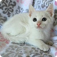Adopt A Pet :: Ratcliff - Tampa, FL