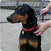Adopt A Pet :: Gibson - New Richmond, OH