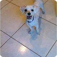 Adopt A Pet :: Franky - Pembroke pInes, FL
