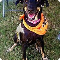 Adopt A Pet :: Cleo - Miami, FL