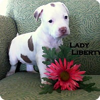 Adopt A Pet :: LADY LIBERTY - Higley, AZ