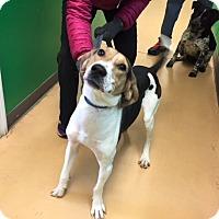 Adopt A Pet :: Winnie-URGENT - Providence, RI