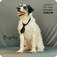 Adopt A Pet :: Bigsby - Missouri City, TX