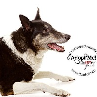 Adopt A Pet :: Pooh Bear - Denver, CO