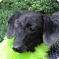 Adopt A Pet :: LIZZY - Portland, OR