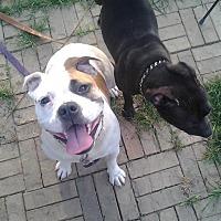Adopt A Pet :: Reesie - Cincinnati, OH