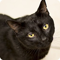 Adopt A Pet :: Satchmo - Chicago, IL