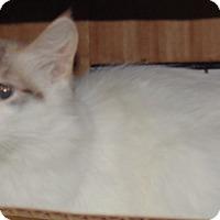 Adopt A Pet :: Miracle - Jackson, MO