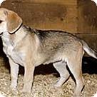 Adopt A Pet :: Springtime 10 Mimi