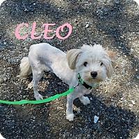 Adopt A Pet :: CLOE - Gustine, CA